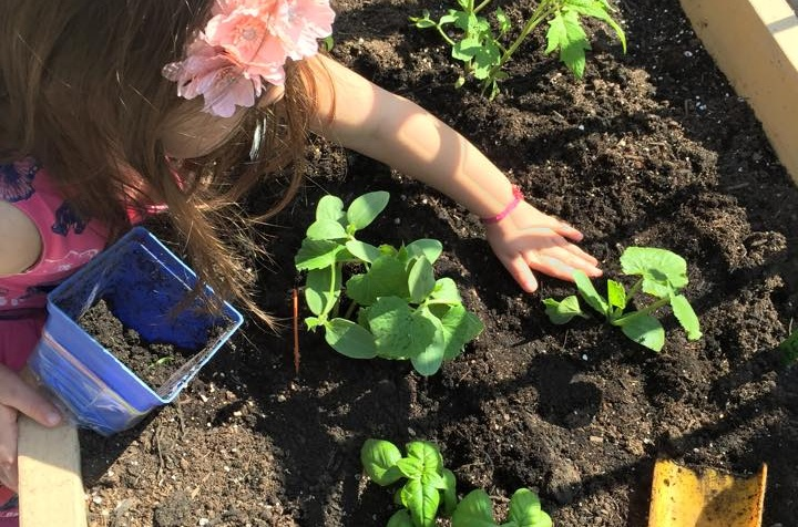 The Growing Benefits of Gardening